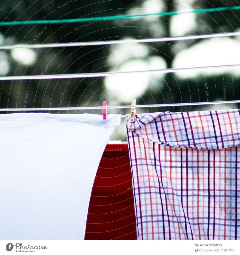 Nachbars Wäsche weiß rot Wohnung Bekleidung Stoff T-Shirt Sauberkeit festhalten Hemd Hose hängen Wäsche waschen kariert trocknen Accessoire Wäscheleine
