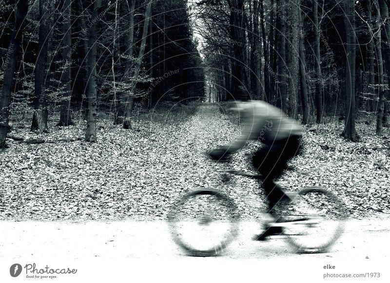 vorbeizischen Fahrrad fahren Radrennen Wald Duplex Sport Natur Fahrradfahren