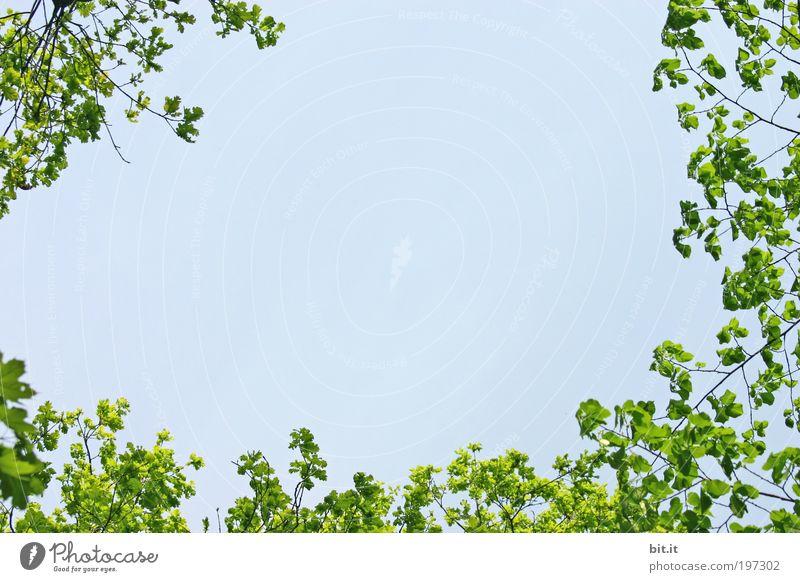 FRÜHLING LIEGT IN DER LUFT II Umwelt Natur Landschaft Pflanze Luft Himmel Schönes Wetter Baum Blatt Grünpflanze Park blau grün Kranz Rahmen umrandung Farbfoto