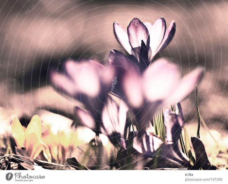Kro....küsse Natur Blume Pflanze Blatt Tier Wiese Blüte Landschaft Gesundheit Umwelt verrückt frisch Fröhlichkeit Wachstum Klima Lebensfreude