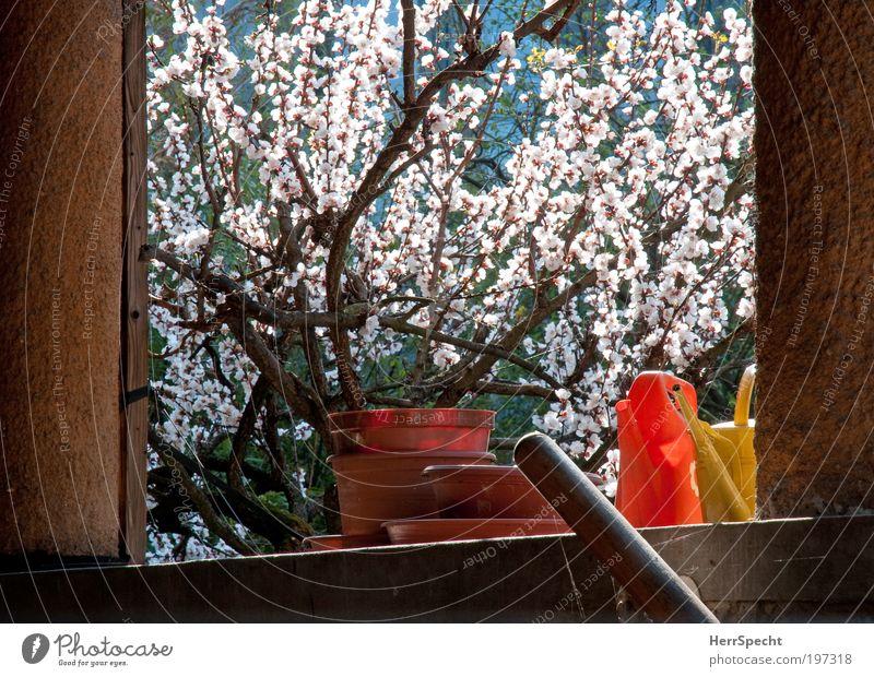 Gartenzeit Natur Pflanze Sträucher Blüte Mauer Wand Treppe Gießkanne Frühling Gartenarbeit Blumentopf Untersetzer Blühend Farbfoto mehrfarbig Außenaufnahme