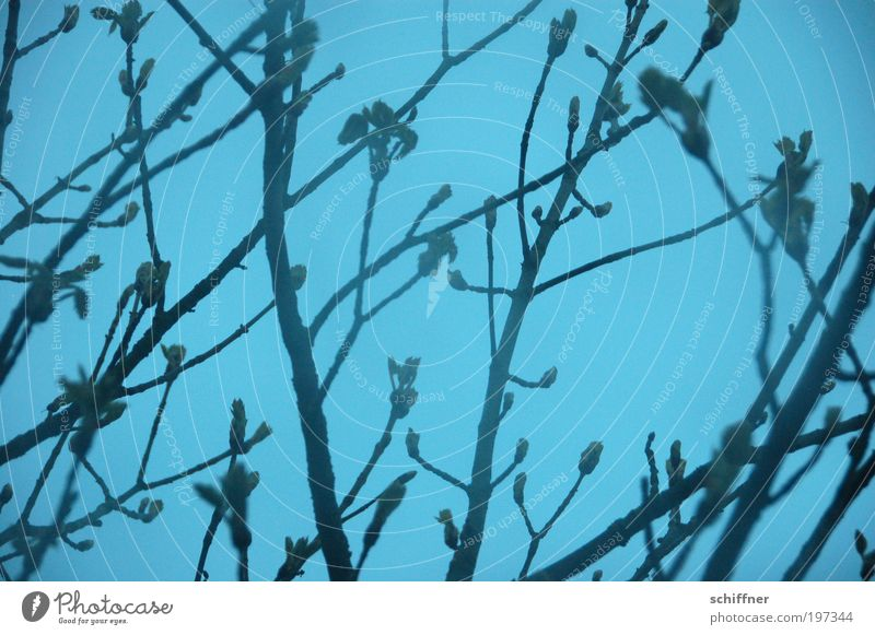 BITTI-ASTLIG Bettwäsche Set Revival Natur Baum Pflanze Frühling Traurigkeit Regen Nebel Ast Gewitter Verzweiflung Blütenknospen schlechtes Wetter austreiben