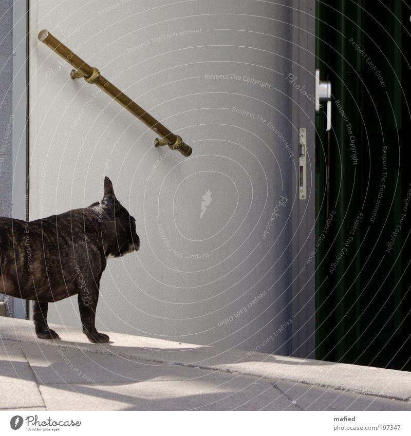 Ich muss leider draußen bleiben Hund weiß Tier schwarz grau Wege & Pfade klein braun Tür gold warten Treppe Hoffnung Neugier Sehnsucht Bar