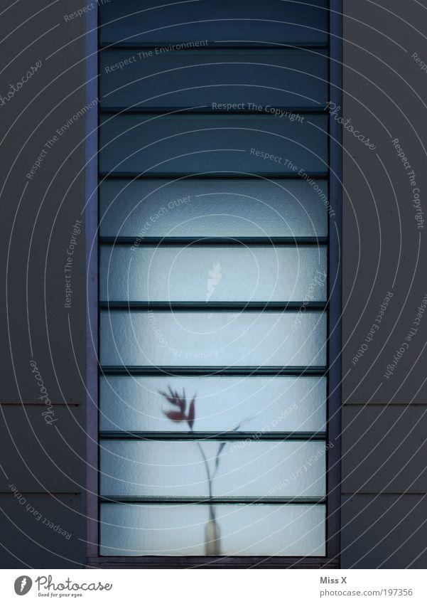 Treppenhaus Häusliches Leben Dekoration & Verzierung Blume Blüte Haus Fenster grau Strelitzie Milchglas Blumenvase Farbfoto Gedeckte Farben Außenaufnahme