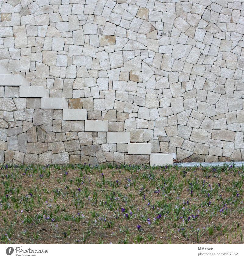 Puzzle Park Mauer Wand Treppe Fußgänger Wege & Pfade Stein gehen grau Anlage herauf abwärts Krokusse Zugang steinig Zyklopenmauerwerk Farbfoto Außenaufnahme