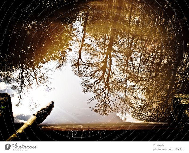 ueber den Dingen stehen... Natur Wasser Himmel Baum Sonne Blatt schwarz gelb Wald Frühling See Park Wärme Landschaft hell braun