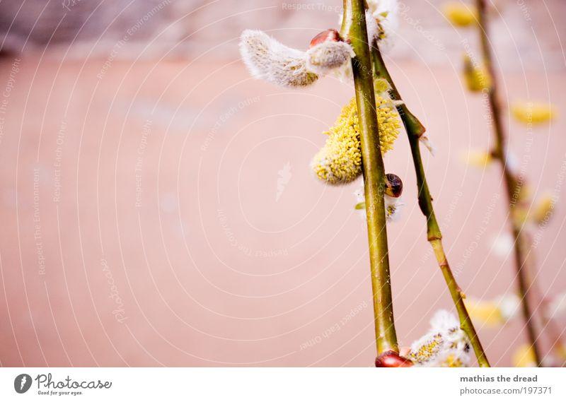 ERSTE ZEICHEN Umwelt Natur Tier Frühling Schönes Wetter Pflanze Gras Sträucher Blatt Blüte Grünpflanze Wiese hängen Beginn Frieden Idylle Leben Leichtigkeit