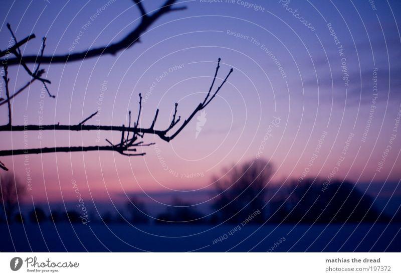 LETZTE ZEICHEN Umwelt Natur Landschaft Pflanze Himmel Wolken Horizont Winter Klima Schönes Wetter Eis Frost Hagel Schnee Baum Blume Gras Wildpflanze Wiese Feld
