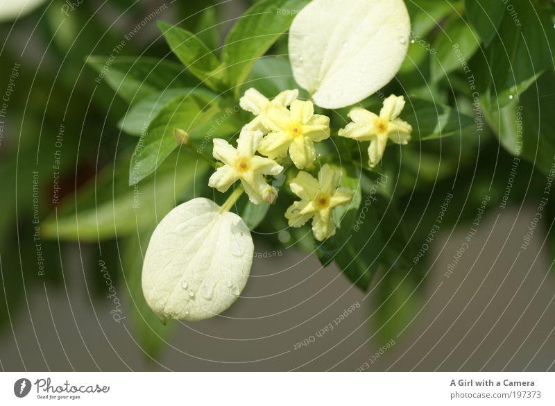 Blooming Blume Natur schön weiß Pflanze Sommer Blatt Ferne Blüte Frühling Park Zufriedenheit hell Stimmung elegant Umwelt