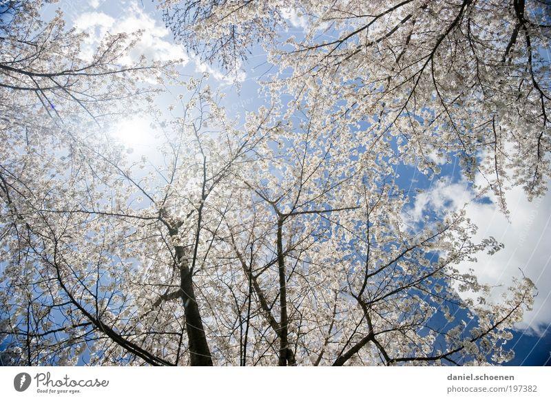 Sonnenenergie Teil 4 Natur Himmel weiß Baum Sonne blau Pflanze ruhig Frühling Park rosa Wetter Wachstum Wandel & Veränderung rein Schönes Wetter