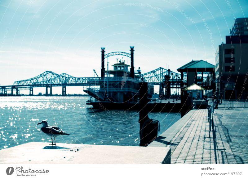 mrs. hibbie Brücke Louisiana USA Fluss historisch Schönes Wetter Möwe Wasserfahrzeug Flussufer Vogel Cross Processing Mississippi New Orleans Raddampfer