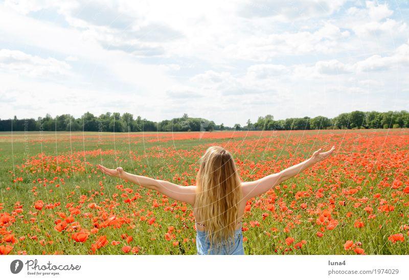 Frau im Mohnfeld Mensch Jugendliche blau Sommer Junge Frau grün Sonne Blume rot Erholung ruhig Freude 18-30 Jahre Erwachsene Blüte