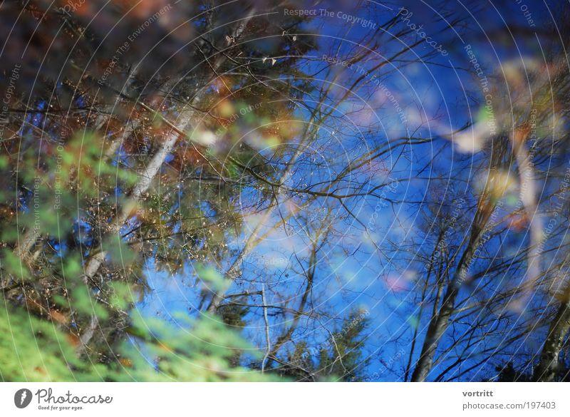 Wald-Traum Natur Wasser Himmel Baum Pflanze Landschaft Luft Umwelt Urelemente Teich Grünpflanze