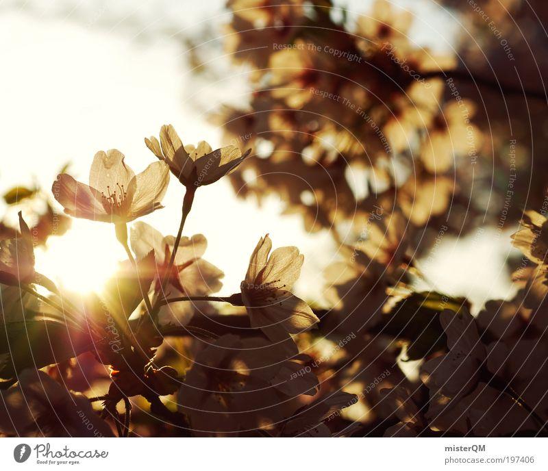 Springtime. Natur weiß Erholung ruhig Umwelt Leben Blüte Frühling natürlich Zeit Freizeit & Hobby ästhetisch Blühend Spaziergang Jahreszeiten viele