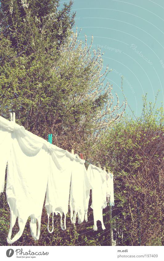 Arme runter Natur Baum Pflanze Garten Wärme hell Umwelt nass T-Shirt Hemd Unterwäsche Wäscheleine Unterhemd