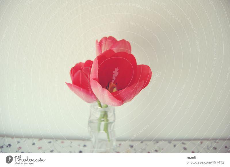unecht Blume Pflanze rot Tisch Dekoration & Verzierung Tulpe Vase Blumenvase