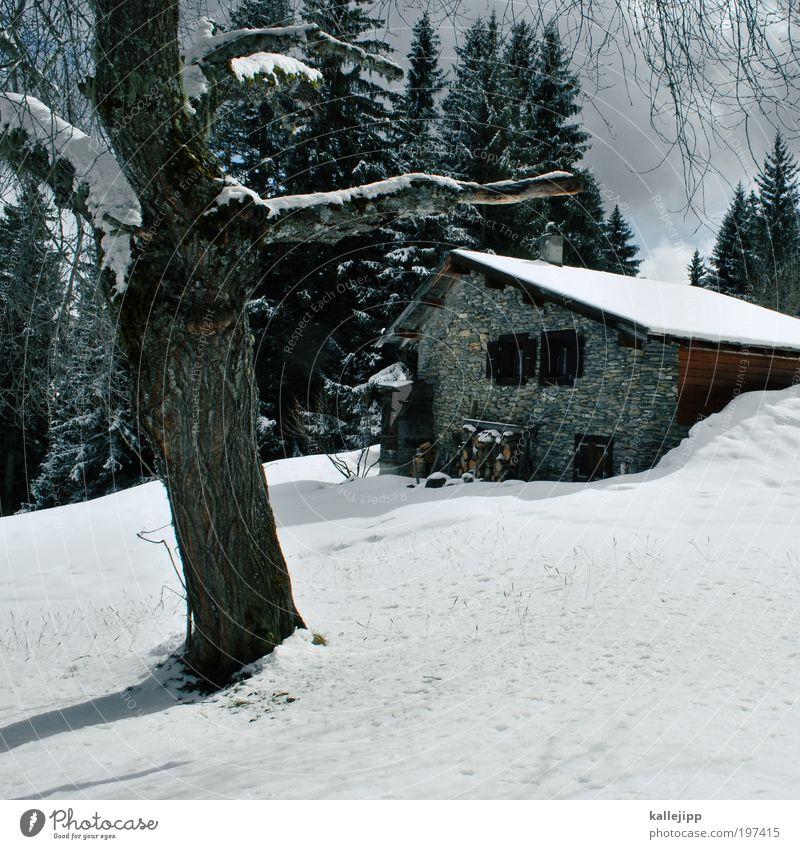 postkarte Natur Baum Einsamkeit ruhig Haus Winter Fenster Berge u. Gebirge Umwelt Wege & Pfade Schnee Stil Lifestyle Wohnung Häusliches Leben Tür
