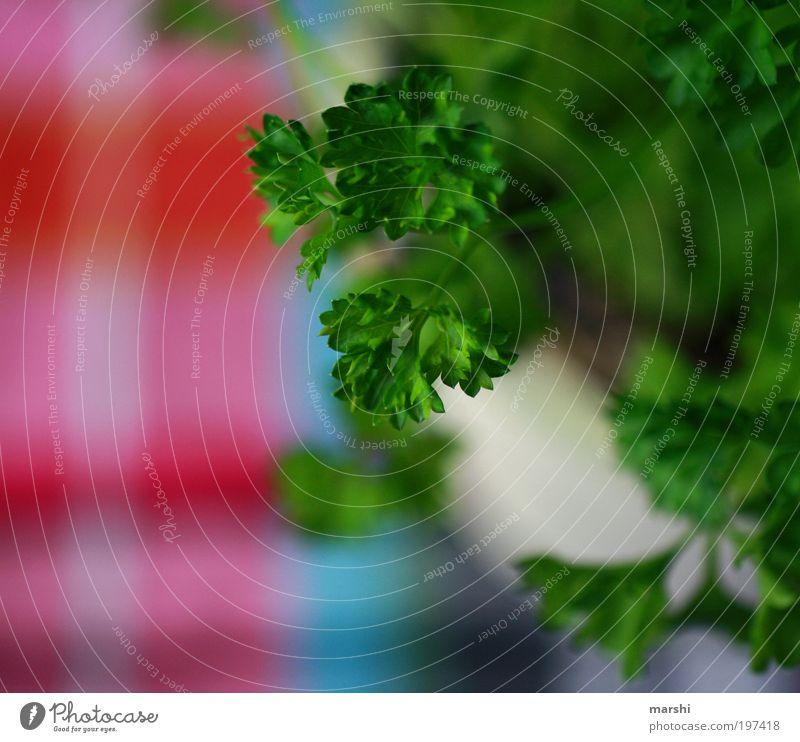 Grünzeug Lebensmittel Suppe Eintopf Kräuter & Gewürze Ernährung mehrfarbig grün Petersilie Unschärfe kariert Küche geschmackvoll Geschmackssinn Geschmackssache