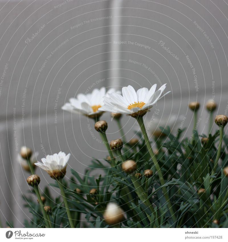 In hell Natur Blume grün Pflanze Blatt Leben Blüte Garten Glück Umwelt Wachstum Frühlingsgefühle