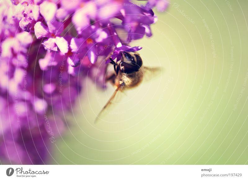die Sache mit.. Pflanze Sommer Tier Frühling Flügel Blühend Biene stachelig verblüht Wespen Nektar Insekt bestäuben aufklären