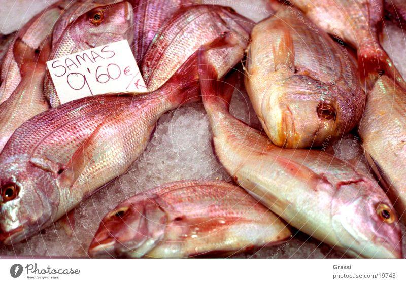 Samas Fisch Fischereiwirtschaft Markt Fischauge Schuppen Dorade Geruch Flosse Schwanz zappeln Eis Verkehr gepökelt gefroren Übelriechend Fischmarkt viele rot