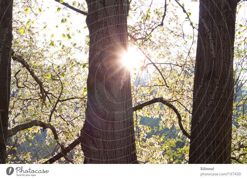almost sunny Natur schön Baum Sonne Blüte Frühling Park Wärme Umwelt authentisch Hügel Sonnenlicht