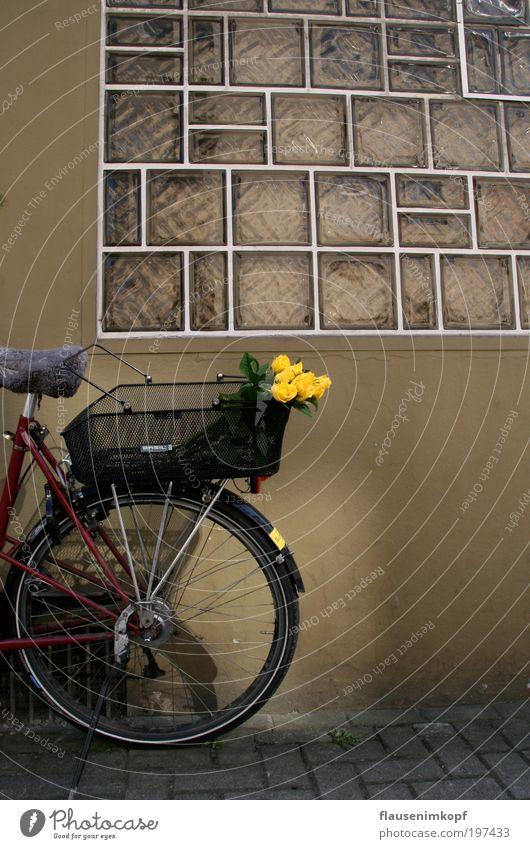Rosen-Kurier Sommer Blume Fenster Wand Mauer Fahrrad Duft