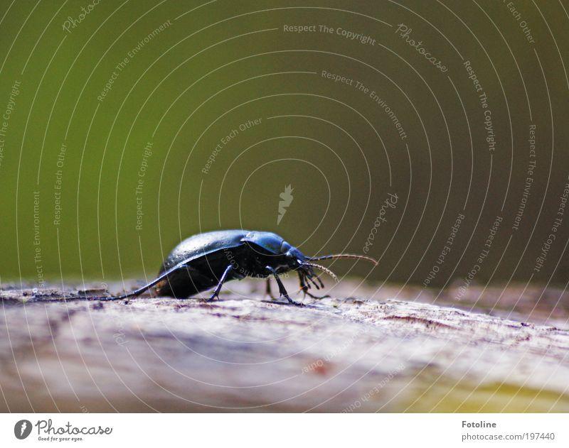 Bockkäfer Umwelt Natur Pflanze Tier Frühling Klima Wetter Schönes Wetter Wärme Baum Park Wildtier Käfer Tiergesicht 1 krabbeln hell klein natürlich Baumstumpf