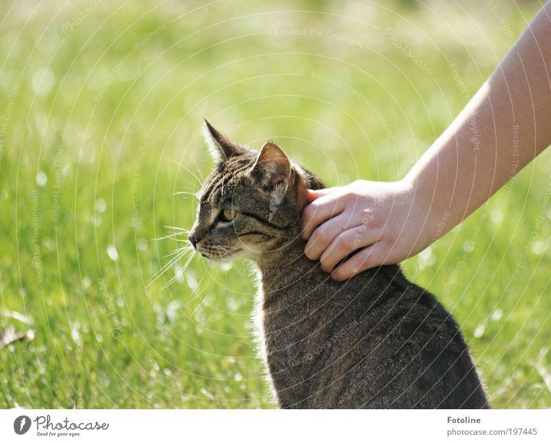 Streicheleinheit Mensch Hand Finger Umwelt Natur Tier Urelemente Erde Frühling Sommer Klima Wetter Schönes Wetter Garten Wiese Haustier Katze Tiergesicht Fell