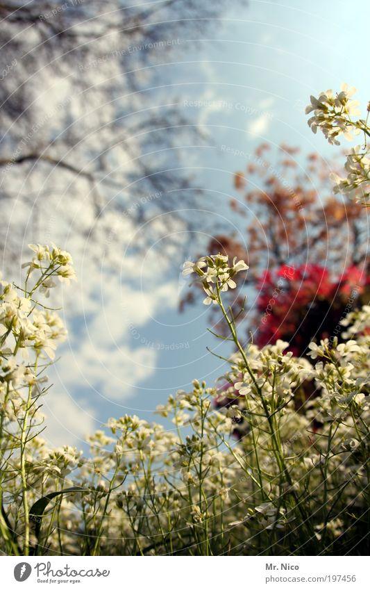 frühling !! Frühling Sommer Schönes Wetter Pflanze Sträucher Park Wiese grün Schleifenblumen Japanischer Ahorn Unkraut Blume Blumenwiese flower frisch