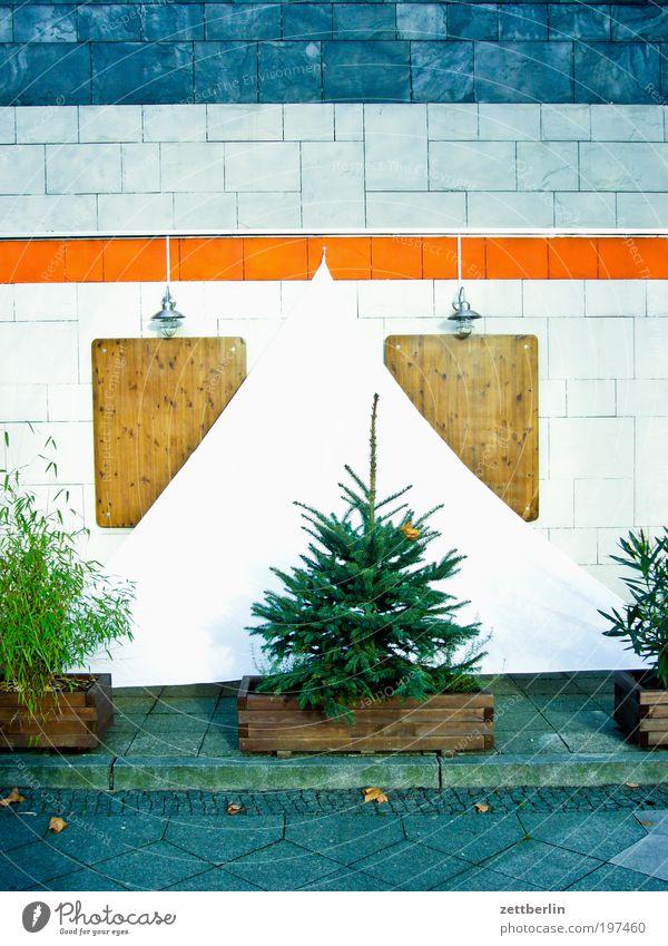 Weihnachtsvorbereitung Dezember Weihnachtsbaum Tanne Nadelbaum Fichte Haus Fassade Fliesen u. Kacheln Farbe Grünpflanze Topfpflanze Segel Verdeck Sonnensegel