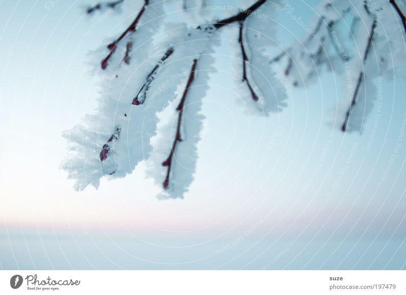 Altschnee Umwelt Natur Landschaft Pflanze Urelemente Himmel Wolkenloser Himmel Horizont Winter Schönes Wetter Eis Frost Schnee ästhetisch authentisch hell kalt