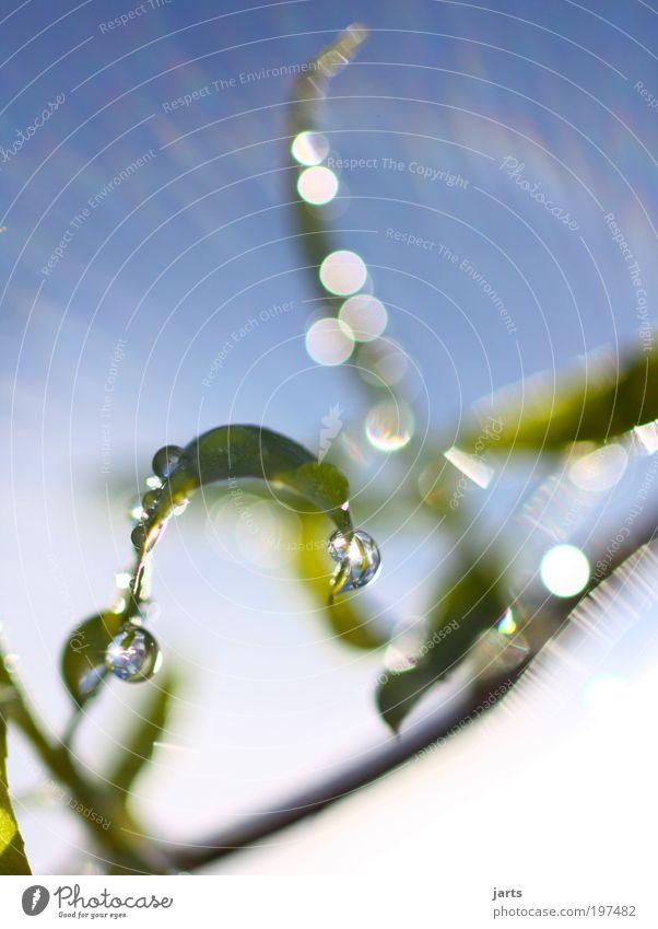 frisches grün Umwelt Natur Wasser Wassertropfen Himmel Sonne Sonnenlicht Schönes Wetter Pflanze Blatt Grünpflanze natürlich schön Kraft rein Farbfoto
