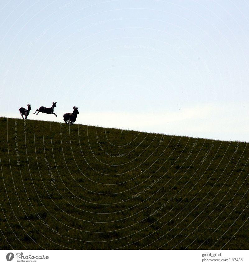 hach, ist das Leben nicht schön? Himmel Natur grün Sommer Freude Tier Umwelt Landschaft Wiese Herbst Gefühle Gras Glück springen Park Zufriedenheit