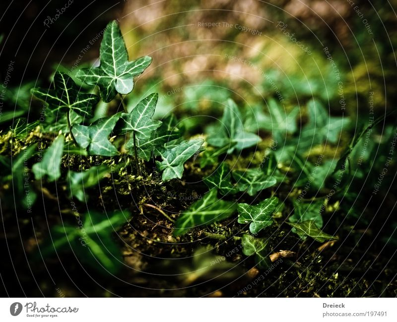 gruenlinge Natur grün Pflanze Blatt Umwelt Frühling Park Erde Urwald Grünpflanze Wildpflanze