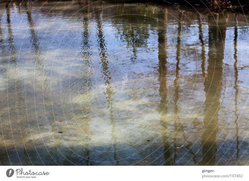 Wasserwelt I - Fischteich Natur Sonnenlicht Schönes Wetter Baum Wellen Teich blau braun grau weich unbeständig Bewegung Baumstamm durchscheinend Linie Neigung
