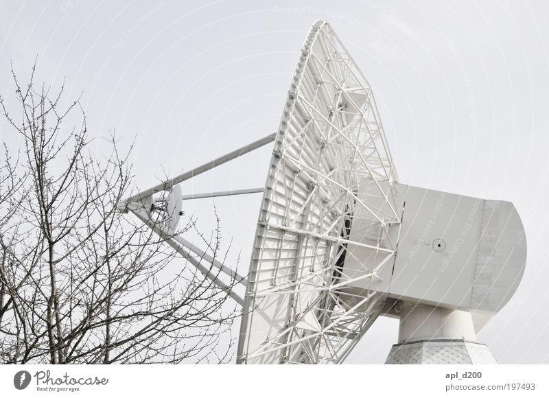 nature vs. human Himmel Natur weiß Baum Pflanze Umwelt grau Bewegung ästhetisch Luftverkehr Zukunft stehen bedrohlich Technik & Technologie Telekommunikation