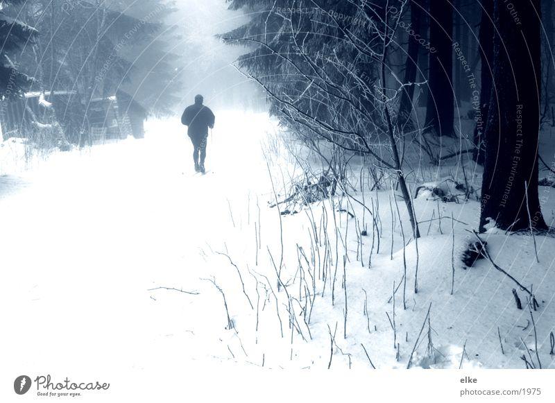 auf dem weg Natur Baum Wald Schnee Berge u. Gebirge Wege & Pfade Skifahrer