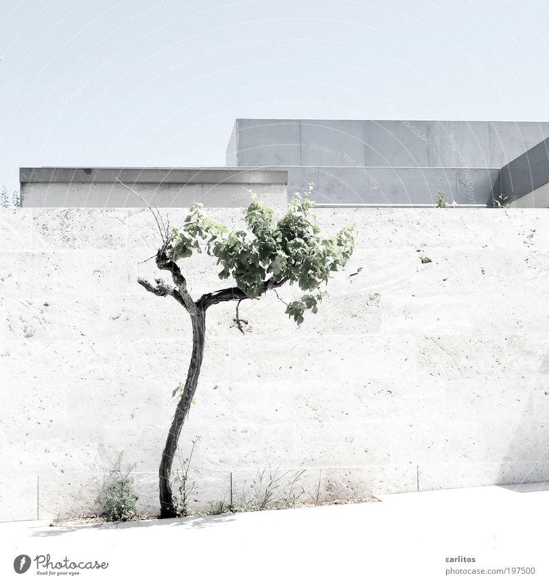 Mauerblümchen weiß Baum blau Sommer Wand Mauer Zufriedenheit hell Metall Architektur ästhetisch Dach Sauberkeit Grenze Bürgersteig