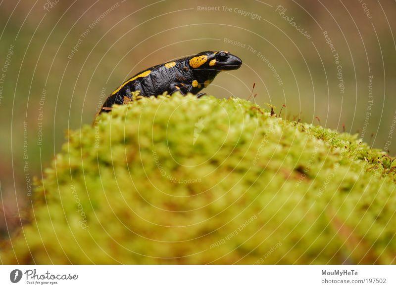 Natur Wasser grün Pflanze rot schwarz Wolken Tier gelb Berge u. Gebirge Frühling Stein braun gold Tiergesicht Wildtier