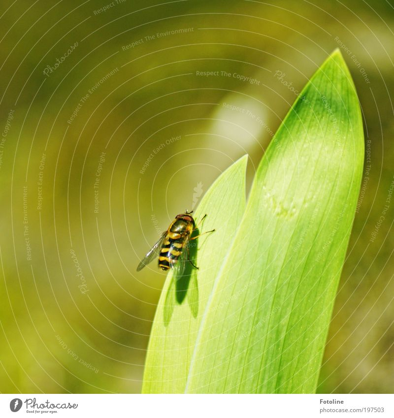 Kurze Pause Natur Pflanze Sommer Blatt schwarz Tier gelb Frühling Park Wärme hell Fliege Wetter Umwelt Pause Klima