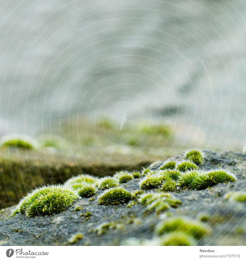 Invasion der Wuschelpuschel Natur Pflanze Stein Park Landschaft Umwelt ästhetisch rund weich zart natürlich Moos Material Quaste