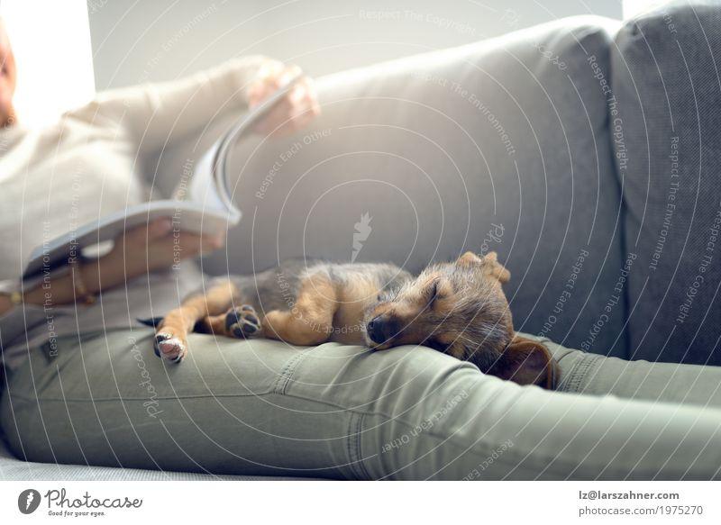 Welpe, der auf Eigentümerschößen schläft Erholung ruhig lesen Sofa Wohnzimmer Frau Erwachsene Tier Haustier Hund Papier schlafen Geborgenheit Nähe Textfreiraum