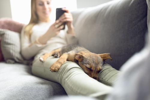Welpe, der auf Eigentümerschößen schläft Erholung ruhig lesen Sofa Wohnzimmer PDA Frau Erwachsene Tier Haustier Hund Lächeln schlafen Geborgenheit Nähe