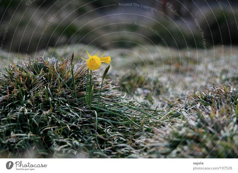 schimmerndes gras [LUsertreffen 04|10] Natur Blume grün Pflanze Einsamkeit gelb Gras Frühling Traurigkeit Umwelt Lebensfreude Grünpflanze Frühlingsgefühle