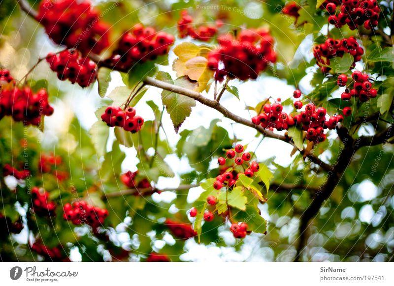 128 [restaurant d'oiseaux] Leben harmonisch Wohlgefühl Zufriedenheit Umwelt Natur Pflanze Frühling Herbst Baum Blatt Frühlingsgefühle ästhetisch Duft Erholung