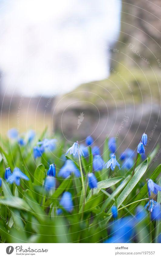 blümchenmakro Natur schön Blume Pflanze Wiese Frühling Park Landschaft Frühblüher