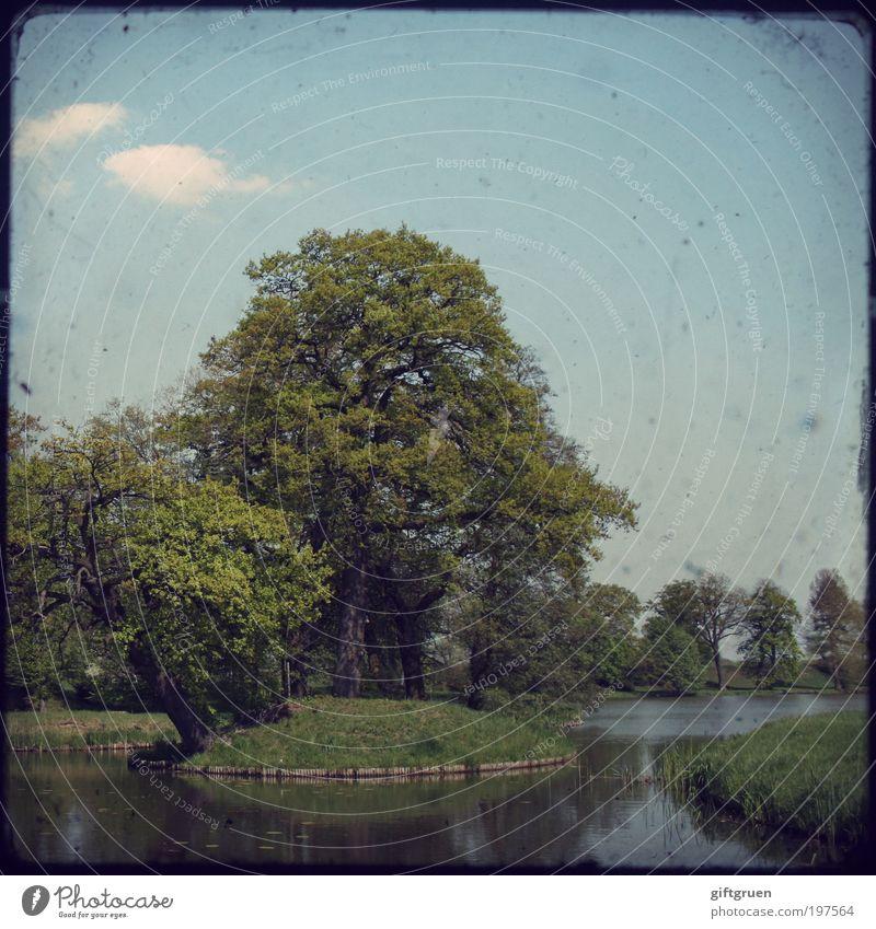 trauminsel Natur Himmel Baum Pflanze Wolken Wiese Park Landschaft Umwelt ästhetisch Insel Pause Idylle Schönes Wetter Teich Paradies