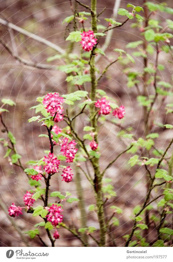 Wildwuchs [LUsertreffen 04|10] Natur schön grün Pflanze Sommer Blatt Wiese Blüte Frühling Park rosa Umwelt Sträucher Ast Muster Wildpflanze