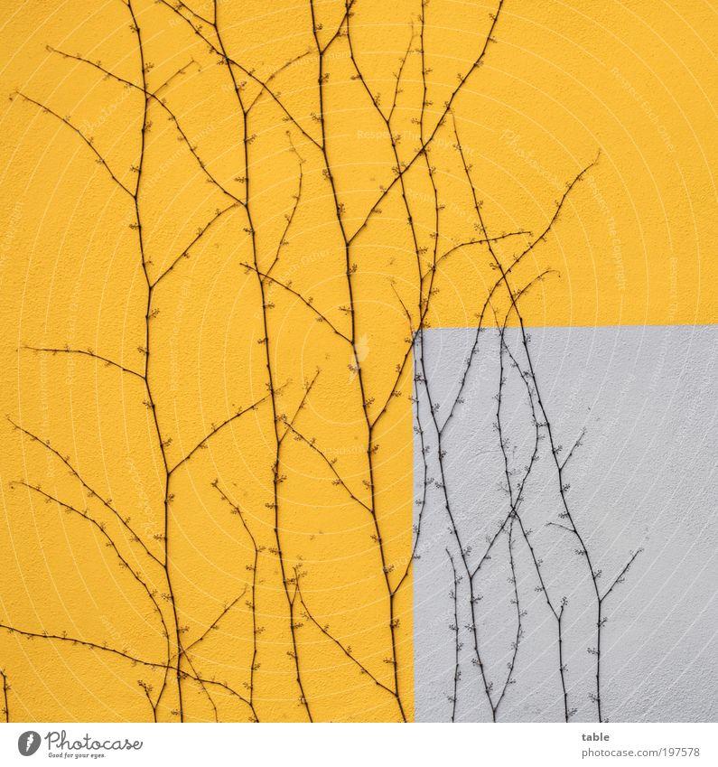besitzergreifend... Natur weiß Blume Pflanze Haus gelb Wand Stil Stein Mauer orange Wohnung Design elegant Umwelt Beton